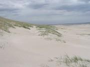 Typische Dünenlandschaft in Westjütland